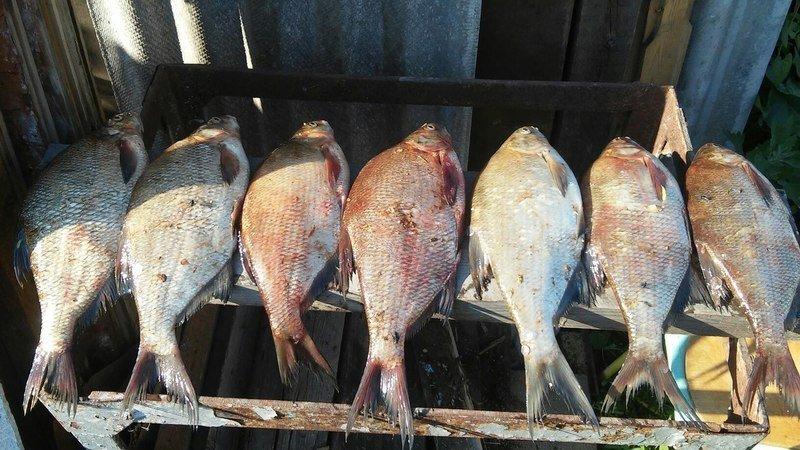 уржумская рыбалка