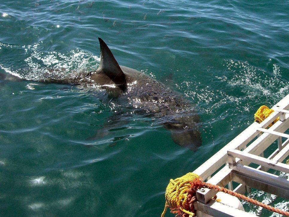 какие акулы водятся в средиземном море фото волос бежевый блондин