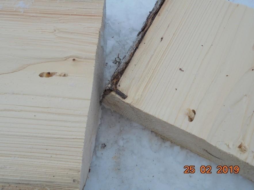 личинки паразитов древесины