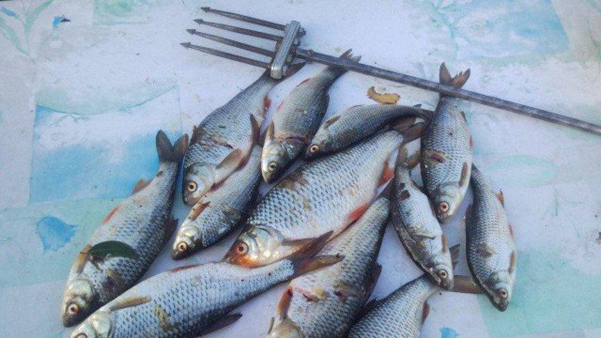 какой штраф за ловлю рыбы