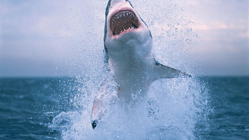 ВСША попытавшийся спасти акулу мужчина чуть неостался без руки