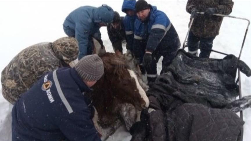 Cотрудники экстренных служб Коми вызволили изсугроба лошадь
