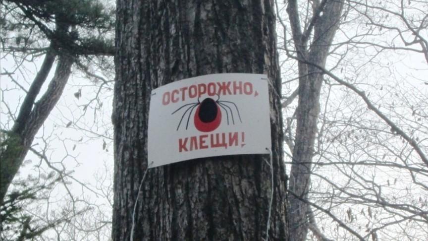 Впятерке регионов РФ поколичеству пострадавших отукусов клещей