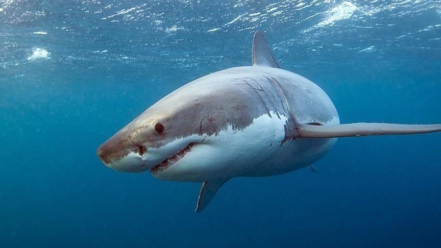 мне акулы виды акул фото национальном парке