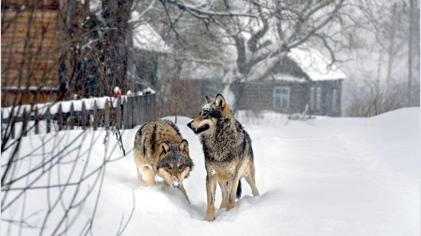 спортом волки в деревне фото держал руки малышей